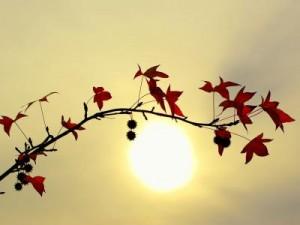 Fondo hojas y sol